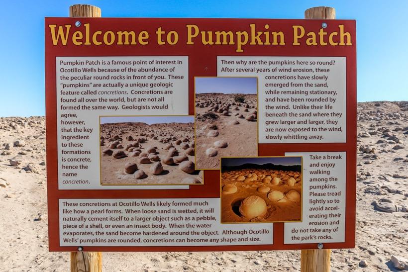 the pumpkin patch anza borrego state park