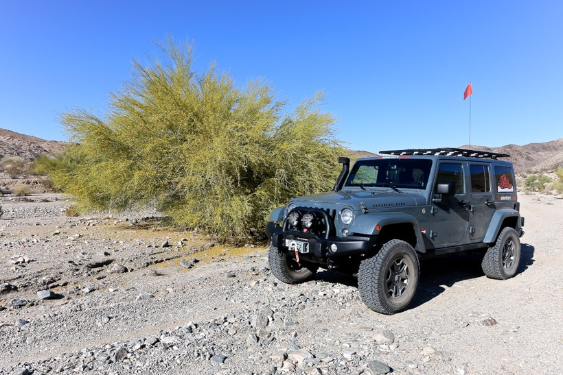 Foliage in Pinkham Canyon-Joshua Tree National Park