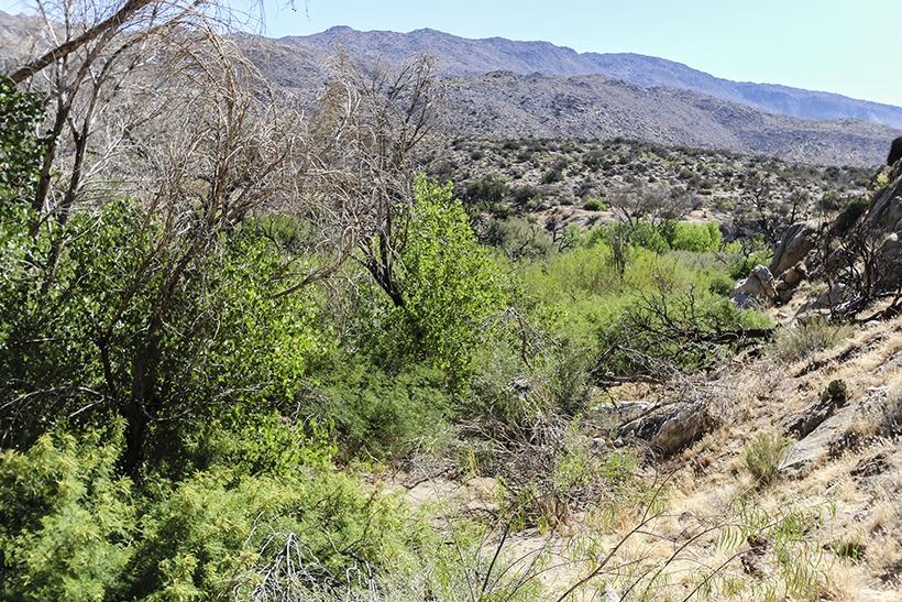Angelina Spring area-Grapevine Canyon trail Anza Borrego