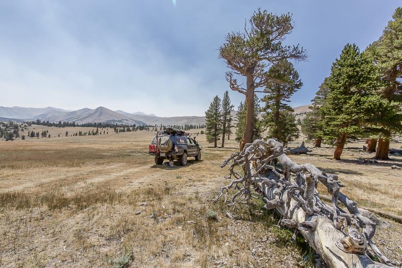 Primitive Camp area 10,500ft Coyote Creek Trail sierra